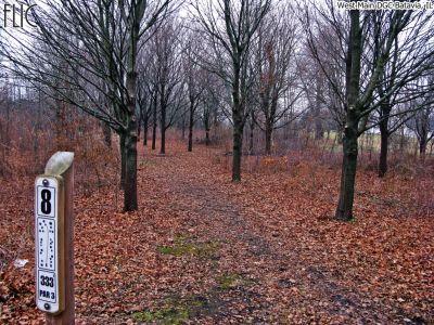 West Main Park, Main course, Hole 8 Tee pad