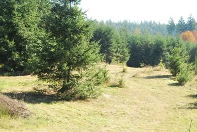 Buxton Woods, Main course, Hole 17 Tee pad