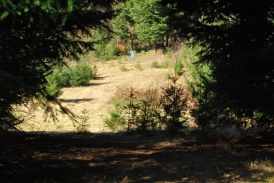Buxton Woods, Main course, Hole 16 Tee pad