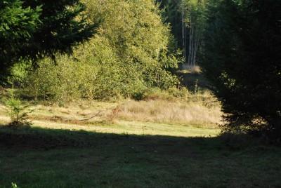 Buxton Woods, Main course, Hole 8 Tee pad