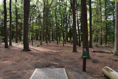 Ocean County Park, Main course, Hole 17 Tee pad