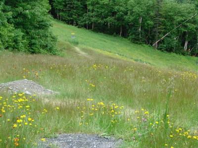 Sugarbush, Peak Course, Hole 6 Short tee pad