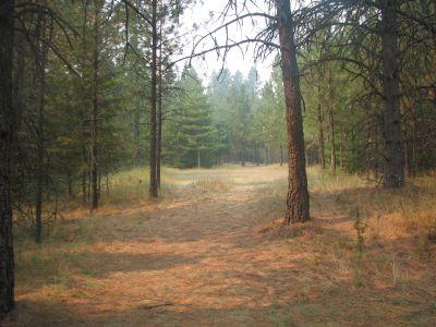 Farragut State Park, A.W.O.L., Hole 11 Tee pad