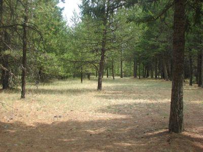 Farragut State Park, A.W.O.L., Hole 2 Tee pad