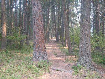 Farragut State Park, A.W.O.L., Hole 13 Tee pad