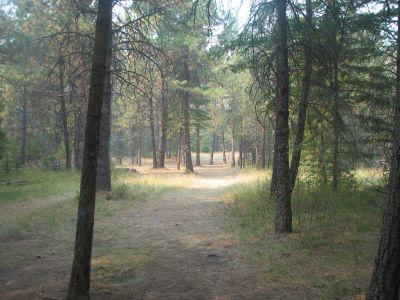 Farragut State Park, A.W.O.L., Hole 14 Tee pad