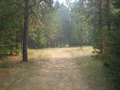 Farragut State Park, A.W.O.L., Hole 12 Tee pad