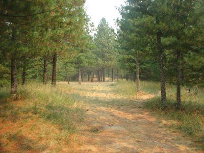 Farragut State Park, A.W.O.L., Hole 9 Tee pad