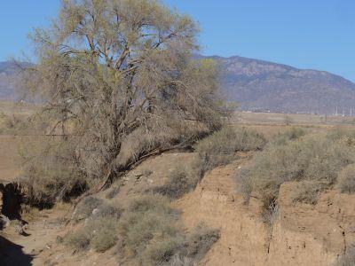 Brent Baca Memorial, Main course, Hole 4 Midrange approach