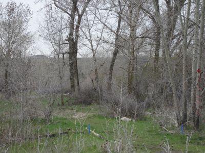 Riverpark, Main course, Hole I Tee pad