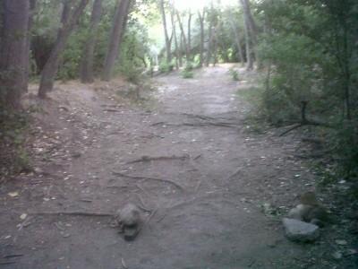 Creekside Park, Main course, Hole 3B Tee pad