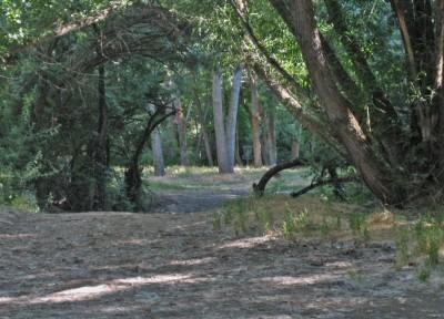 Creekside Park, Main course, Hole 3A Tee pad