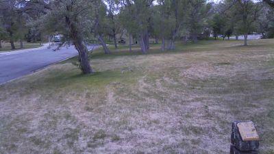 Deer Field at Washington Park, Main course, Hole 9 Tee pad