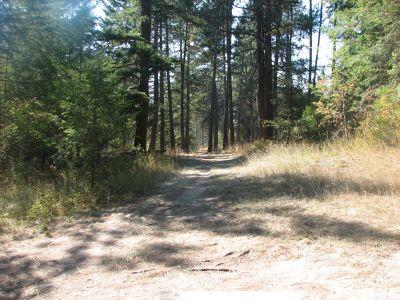 Farragut State Park, Wreckcreator, Hole 17 Tee pad