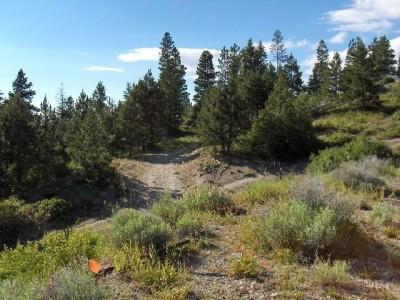 Bogus Basin, Pioneer Lodge, Hole 14 Tee pad