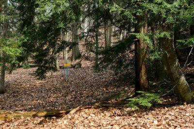 Nestrom Road Park, Fruitland Township DGC, Hole 2 Midrange approach