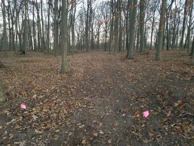 Ingham Park, Whippets Run, Hole 1 Tee pad