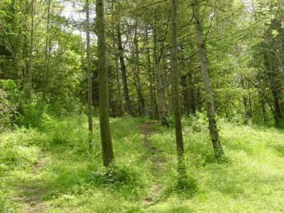 Oxbow Falls Park, Main course, Hole 5 Long approach