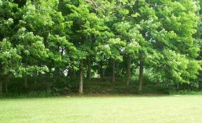 Joralemon Park, Main course, Hole 4 Midrange approach