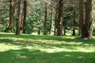 Ellison Park, Main course, Hole 14 Long tee pad