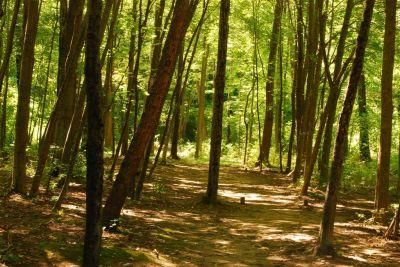 Basil Marella Park, Main course, Hole 10 Long tee pad