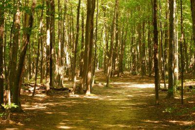 Basil Marella Park, Main course, Hole 8 Long tee pad