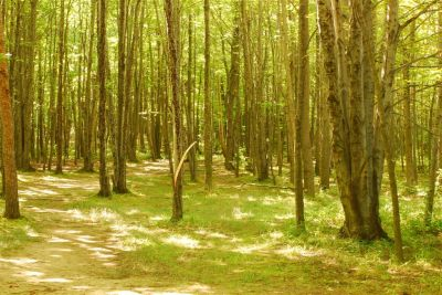 Basil Marella Park, Main course, Hole 2 Long tee pad