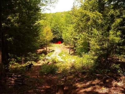 Hyzer Creek, Main course, Hole 8 Tee pad