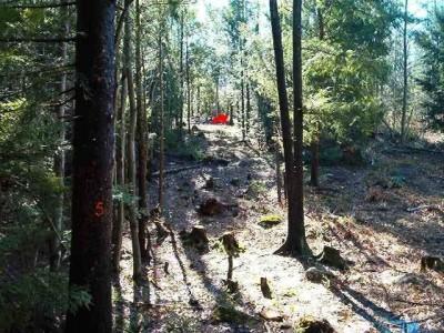 Hyzer Creek, Main course, Hole 5 Tee pad