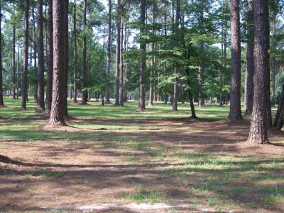 Georgia SouthWestern, Main course, Hole 3 Tee pad