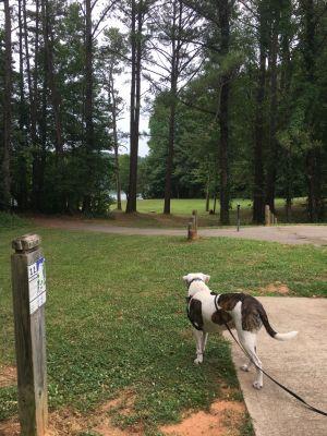 Sandy Creek Park, Main course, Hole 11 Tee pad