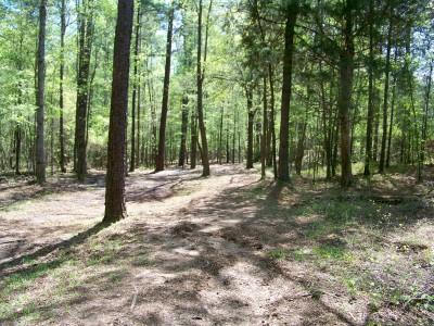 Patriot's Park, Main course, Hole 6 Midrange approach