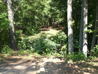 Oregon Park, Main course, Hole 11 Long tee pad