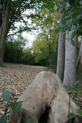 Bandemer Park, Bandemer, Hole 8 Midrange approach