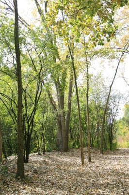 Bandemer Park, Bandemer, Hole 2 Short approach