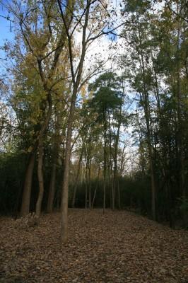 Bandemer Park, Bandemer, Hole 5 Long approach