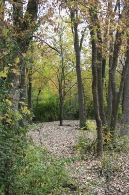 Bandemer Park, Bandemer, Hole 4 Midrange approach