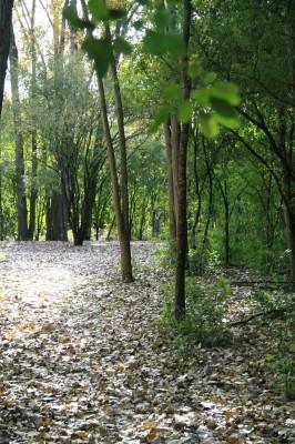 Bandemer Park, Bandemer, Hole 1 Long approach