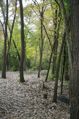Bandemer Park, Bandemer, Hole 6 Midrange approach