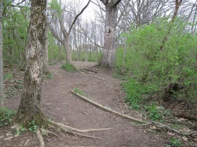 Veterans Park, Main course, Hole 12 Tee pad