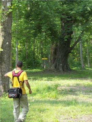 Paducah DGC @ Stuart Nelson Park, Main course, Hole 5 Midrange approach