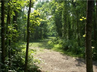 Paducah DGC @ Stuart Nelson Park, Main course, Hole 8 Long approach