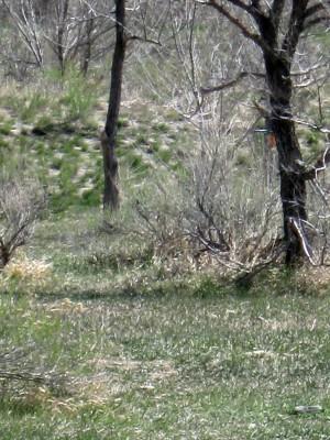 Bird's Nest Disc Park, Main course, Hole 9 Midrange approach
