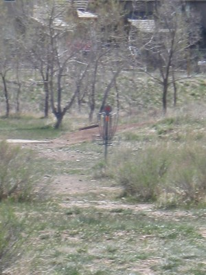 Bird's Nest Disc Park, Main course, Hole 8 Midrange approach