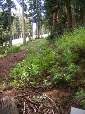 Aspen Mountain, Main course, Hole 17 Tee pad