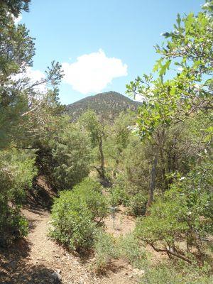 Poncha Springs, Main course, Hole 9 Tee pad