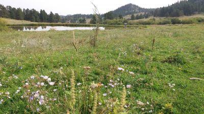 Sundance Trail Ranch, Main course, Hole 15 Short approach