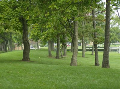 Lake Township Park, Main course, Hole 5 Tee pad