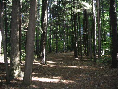 Kenwood Heritage Park, Main course, Hole 11 Tee pad