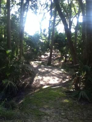 Kathryn Abby Hanna Park, Main course, Hole 9 Midrange approach